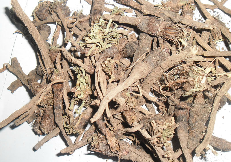 Pellitory Root: Qualities and Benefits According to Ayurveda