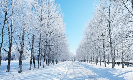 Ayurveda Foods to Stay Strong and Healthy During Winter