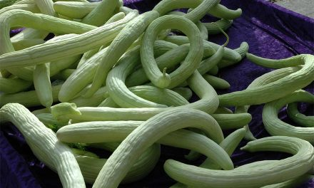 Benefits of Snake Cucumber According to Ayurveda