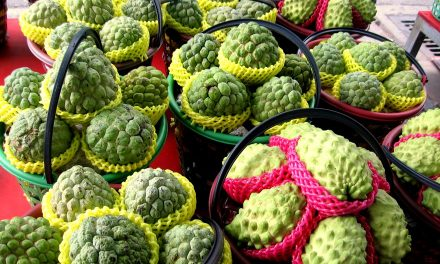 Health Benefits of Eating Sugar Apple or Custard Apple