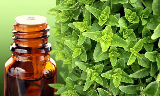 Oregano Oil: One Of Nature's Ultimate Effective Antibiotics