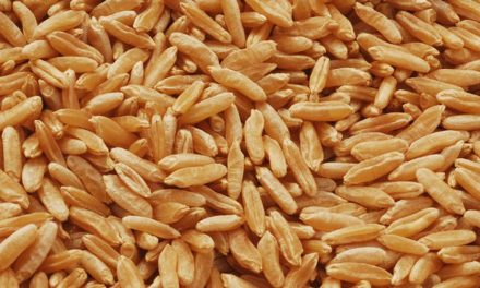 Health Benefits of Wheat and Its Nutritional Value