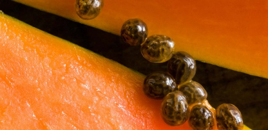 papaya seeds2