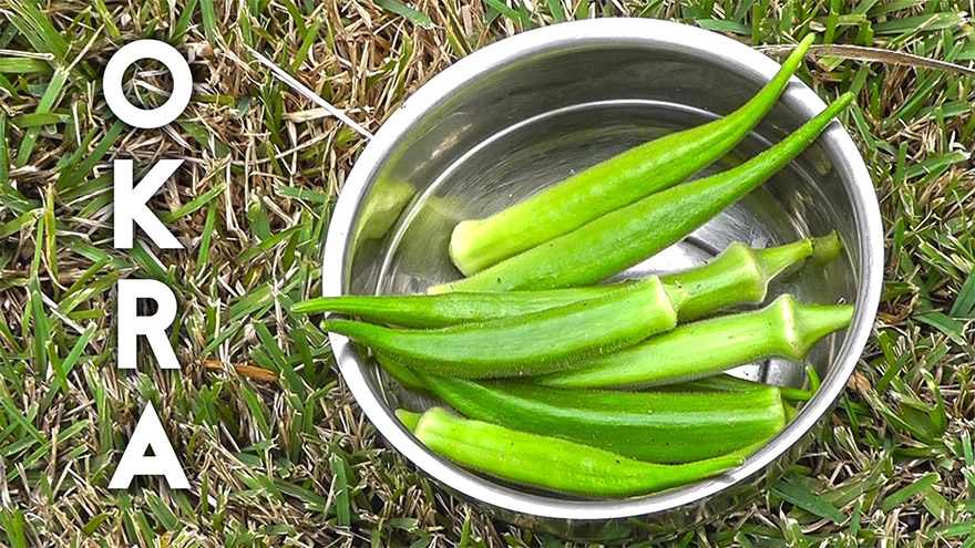 Treat Diabetes, Asthma, Cholesterol and Kidney Diseases with Okra Water