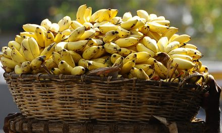 Add Bananas to Your Diet to Keep Eyes Healthy