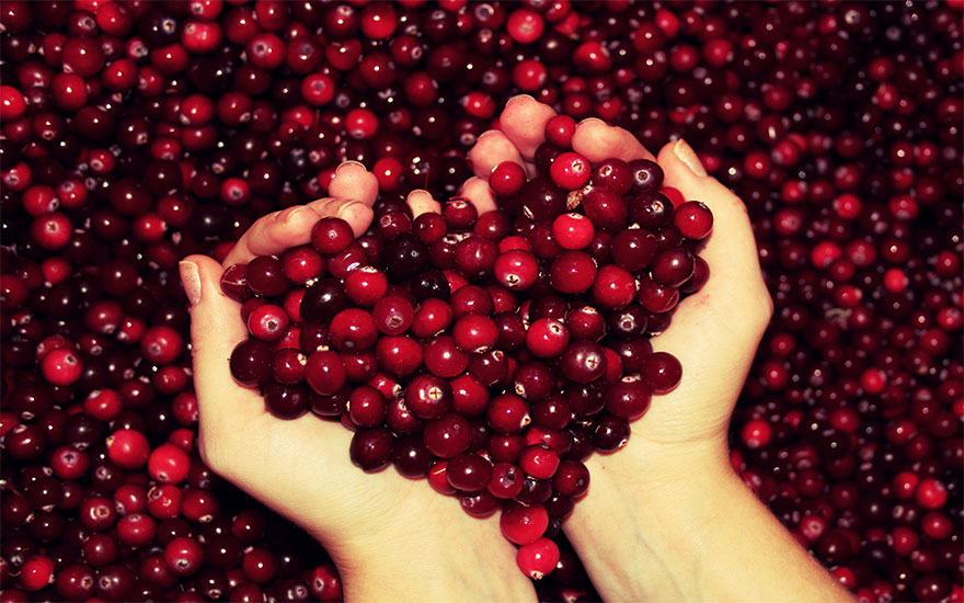 Cranberry Helps Fight Harmful Bacterial Infections